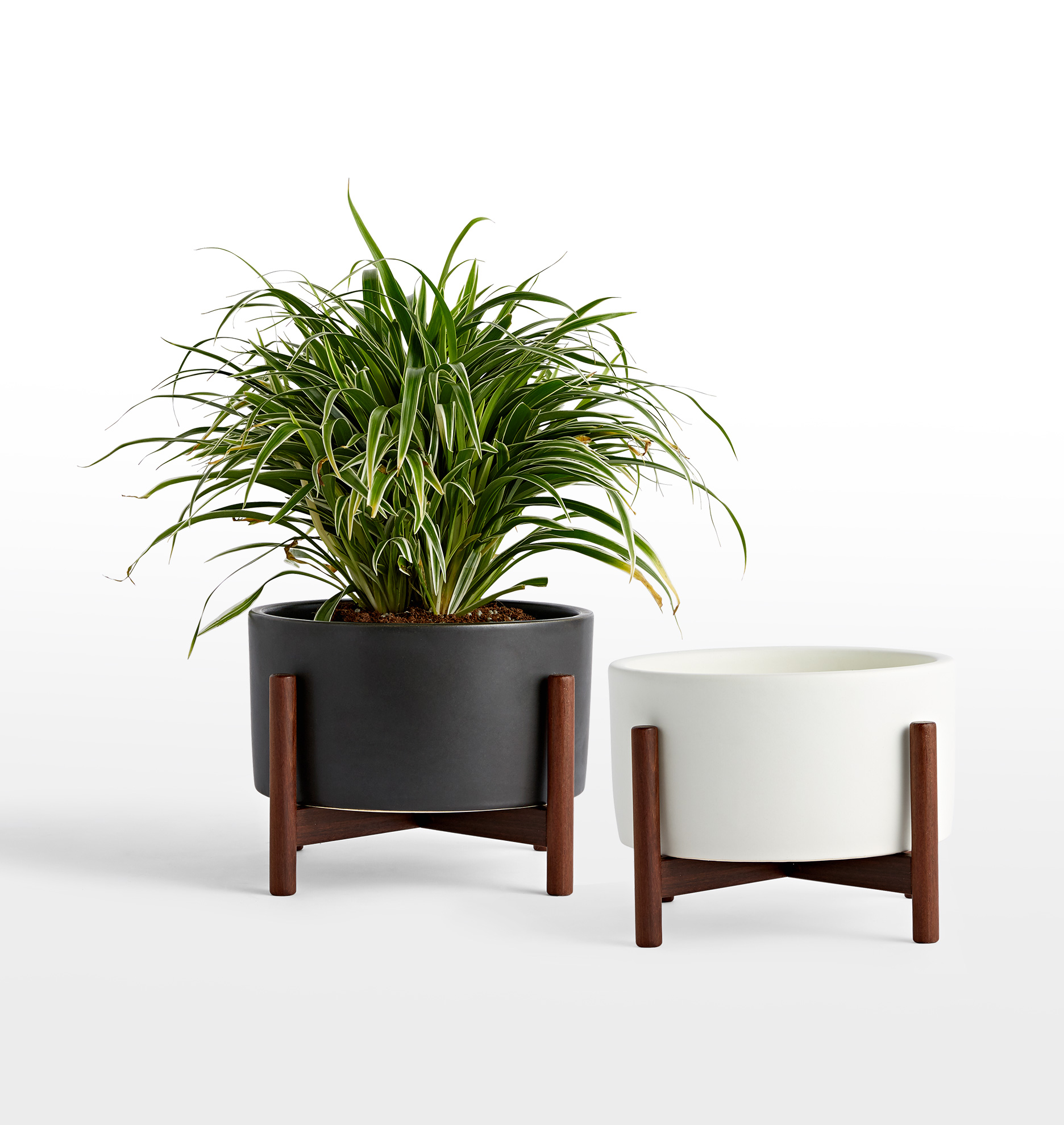 modernica case study table top cylinder with walnut stand