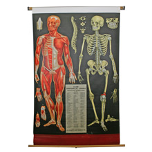George F. Cram Educational Anatomical Chart C1940